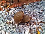 Click image for larger version.  Name:Two Turtles.jpg Views:9 Size:203.8 KB ID:264131